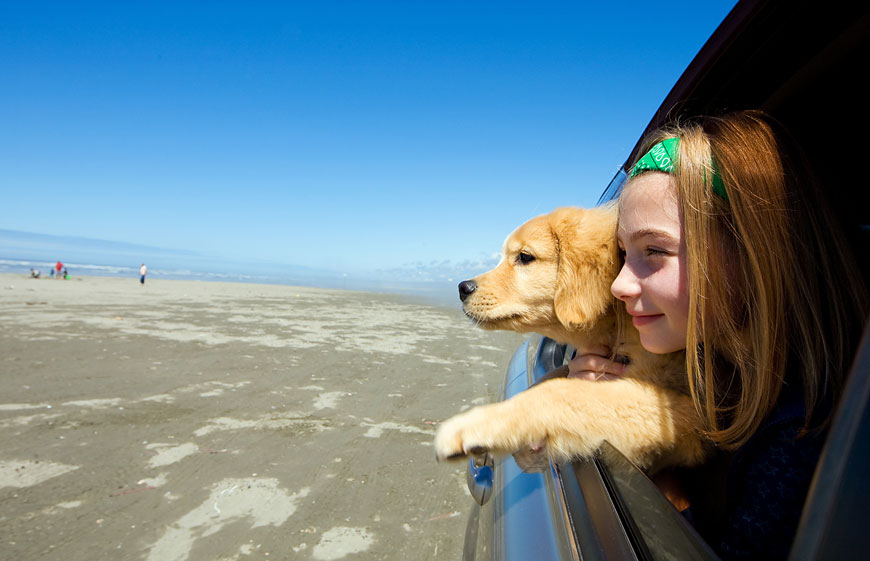 Young girl and puppy looking out car window